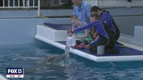 14 years later, Winter the Dolphin reunited with fisherman who found her