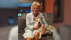 Clearwater community helps reunite owner who lost dog after car crash