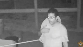 Video of person of interest released in slaughtered horse case