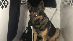 Deputies: K9 helps capture suspect in Pasco County after an alert deputy thwarts burglary