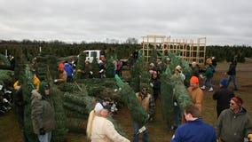 Farm donates more than 400 Christmas trees to military families
