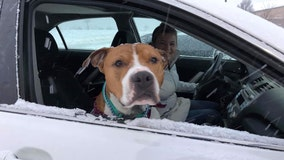 More than a dozen volunteers form relay, travel 2,000 miles to return stolen dog to family