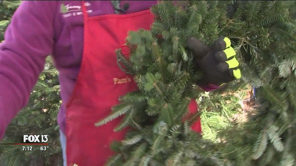 Tampa business makes hundreds of fresh wreaths each year for the holidays