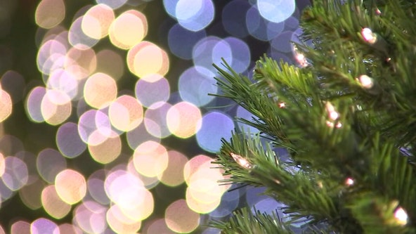 The great Christmas tree debate: Real or artificial?
