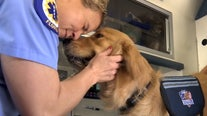 Service dog donated to help Manatee County first responders manage stress
