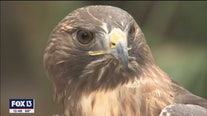 Birds of prey are found in this Clearwater nature park