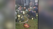 Firefighters save eight cats from house fire