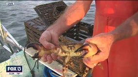Go on a crabbing adventure with Captain Guy