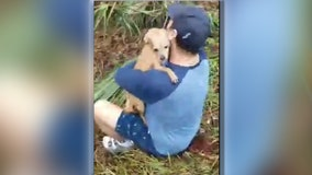 A Florida man reunited with his best friend days after the dog disappeared following a crash