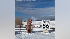 'T-Rex' Plays in Snow Near Iconic Route 66 Sign in Arizona