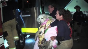 Firefighters rescue 90-pound puppy trapped underground