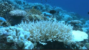'Super Coral Play': NFL initiative wants to help save coral reefs around Florida