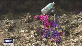 Campaign to keep beads out of Tampa Bay appears successful