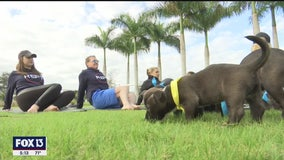 Puppies join pro athletes for yoga at IMG Academy