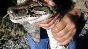 After Python Bowl success, 'Wildman' stresses importance of python hunt