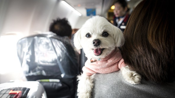 Airlines could ban emotional-support animals under proposed rule change