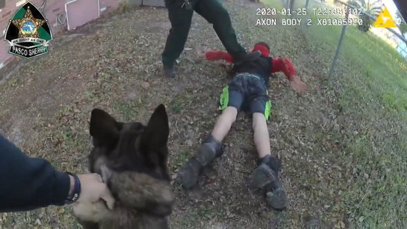 Body cam video: Pasco K-9 Shep quickly takes down fleeing suspect
