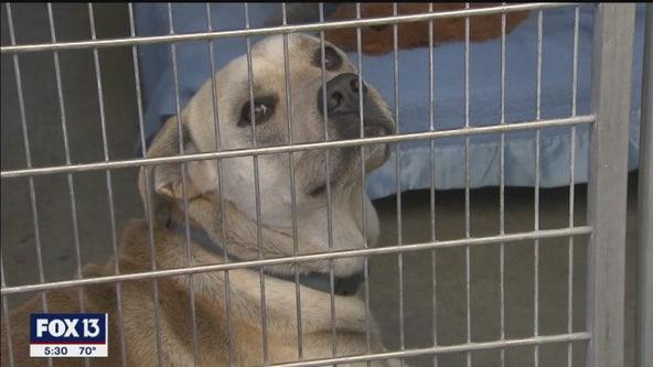 Hernando commissioner suggests man should shoot 'dangerous' dog