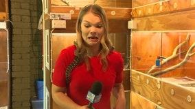 Snake strikes reporter's microphone in Australia