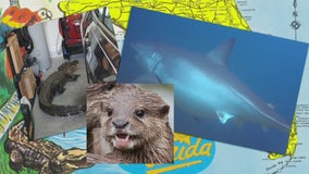 Attack of the river otter and other things only in Florida