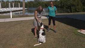 New training method gives dogs the ability to choose