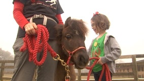 7-year-old has idea to help charities through family's café, raises over $1,000 for local horse rescue