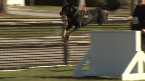 Dozens of police dogs show off skills in Pinellas Park