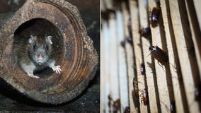 Zoo will name cockroach or rat after your ex, feed it to a bird or reptile on Valentine's Day