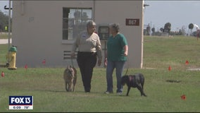Dogs trained to find bodies after thousands of years search for graves of African Americans at MacDill Air Force Base