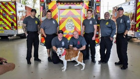 Shelter dog battling terminal cancer becomes honorary Pasco County firefighter