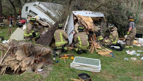 Tree falls on Pasco mobile home, injures elderly woman