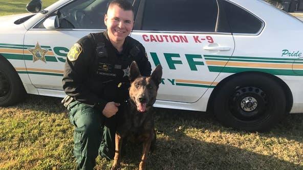 Polk County deputy arrested in Seffner for DUI
