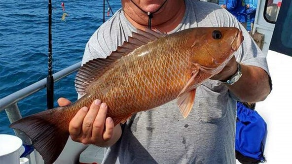 Mangrove snapper would be a good target this weekend