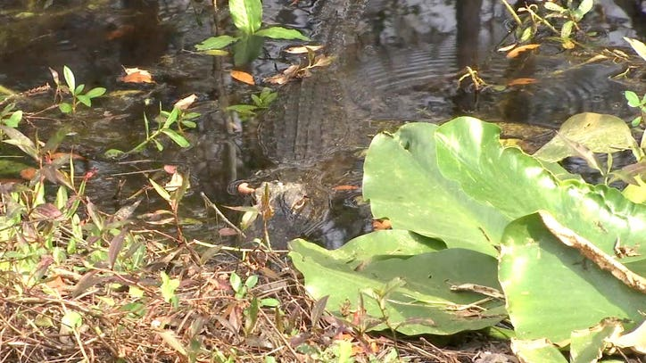 'Real Florida' nature is what you'll find at Colt Creek State Park
