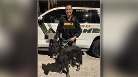 Pasco K9 assists in arrest after suspect crashes into patrol car, nearly hit officer and flees