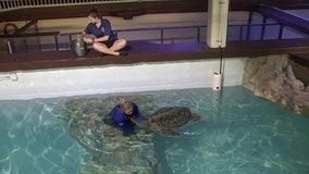 Clearwater Marine Aquarium closed, but rescue and rehabilitation continues