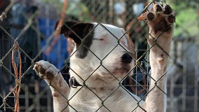 Florida county creates new animal cruelty task force