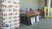Palmetto farmer selling tomatoes at cost
