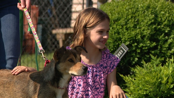 Pet adoptions on the rise during coronavirus outbreak