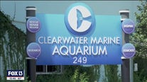 Clearwater Marine Aquarium back open for Memorial Day weekend
