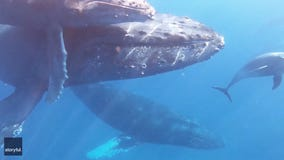 Family scattering grandmother's ashes met by whales and dolphins in memorable encounter