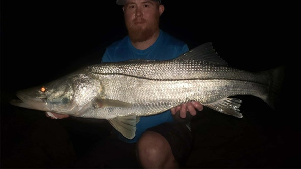 Snook bite is active inshore