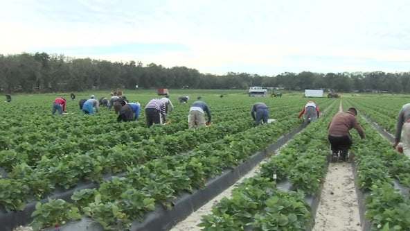 Polk charity staves off hunger for migrant families