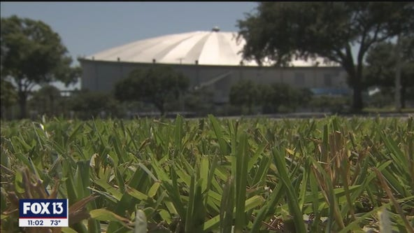 Tampa Bay Rays to hold workout at Tropicana Field
