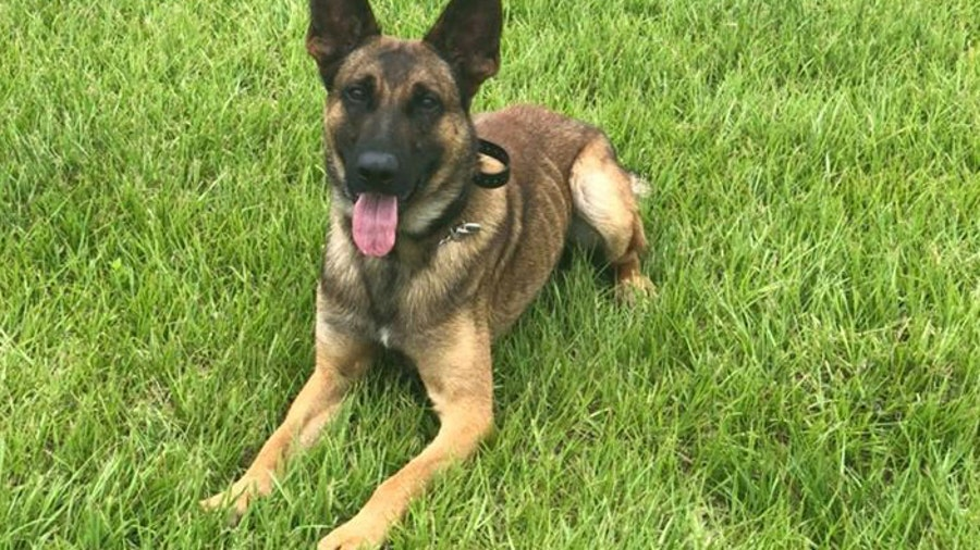 Tampa Police Department welcomes new K9 crime fighter