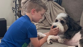 Community helps return Tampa family's wayward therapy dog