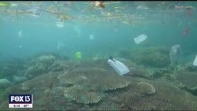 Despite progress in Tampa Bay, microfiber pollution devastating sea life worldwide