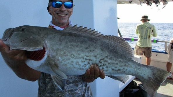 Gag grouper biting best offshore