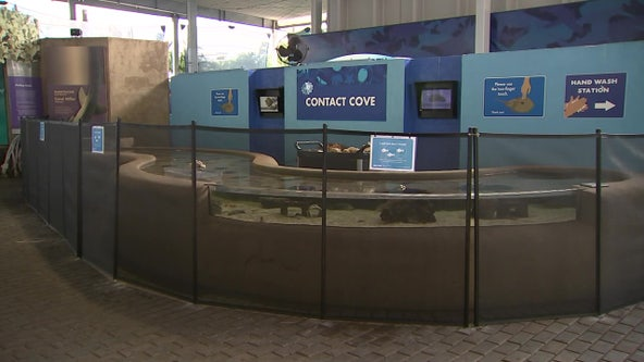 Mote Aquarium reopens with safety measures in place