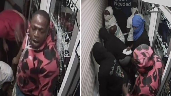 Deputies search for looting suspects who broke into Tampa jewelry store